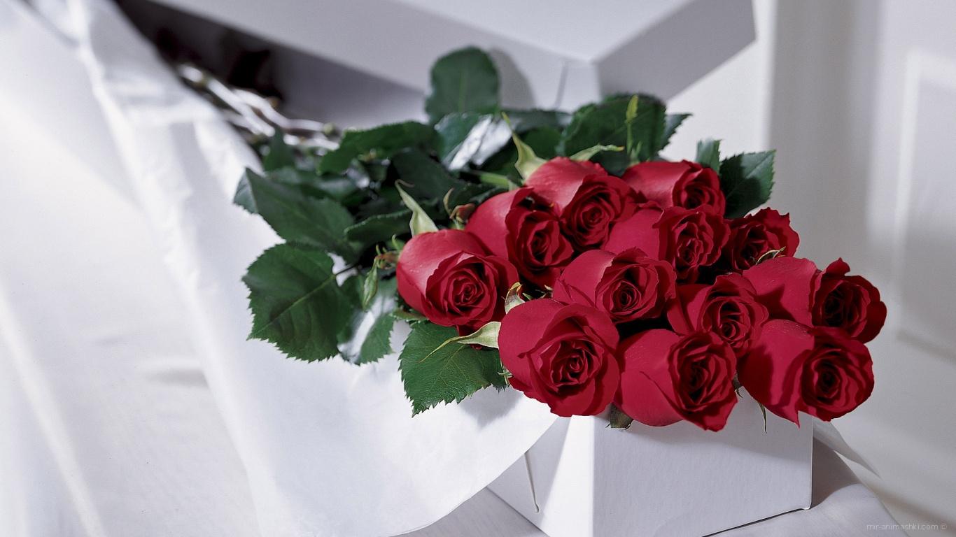 Красные розы на 8 марта в белой коробке - C 8 марта поздравительные картинки