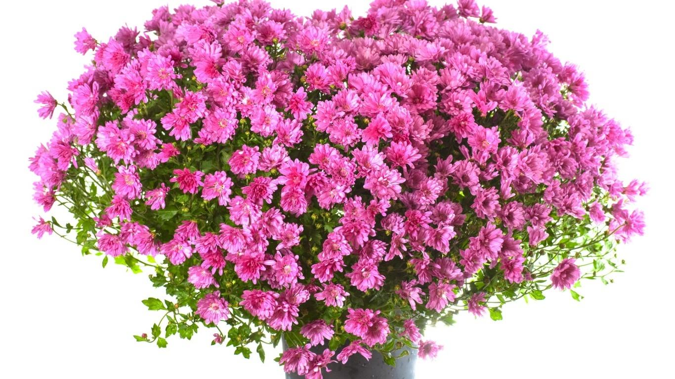 Огромный букет розовых цветов девушке на  8 марта - C 8 марта поздравительные картинки