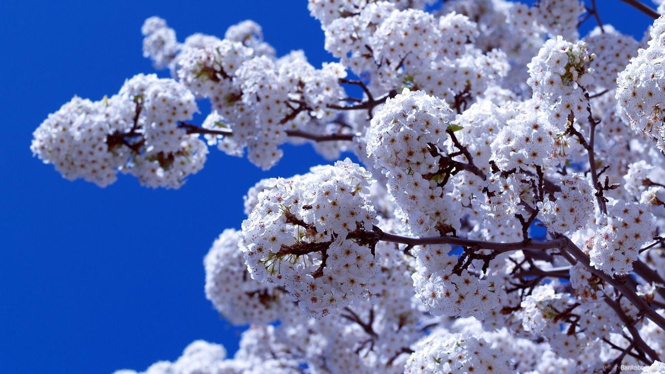 Весеннее цветение на 8 марта - C 8 марта поздравительные картинки