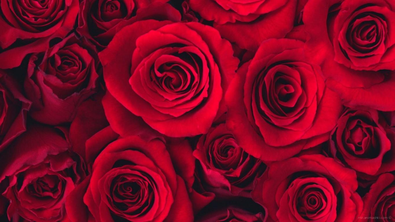 Букет роз на 8 марта - C 8 марта поздравительные картинки