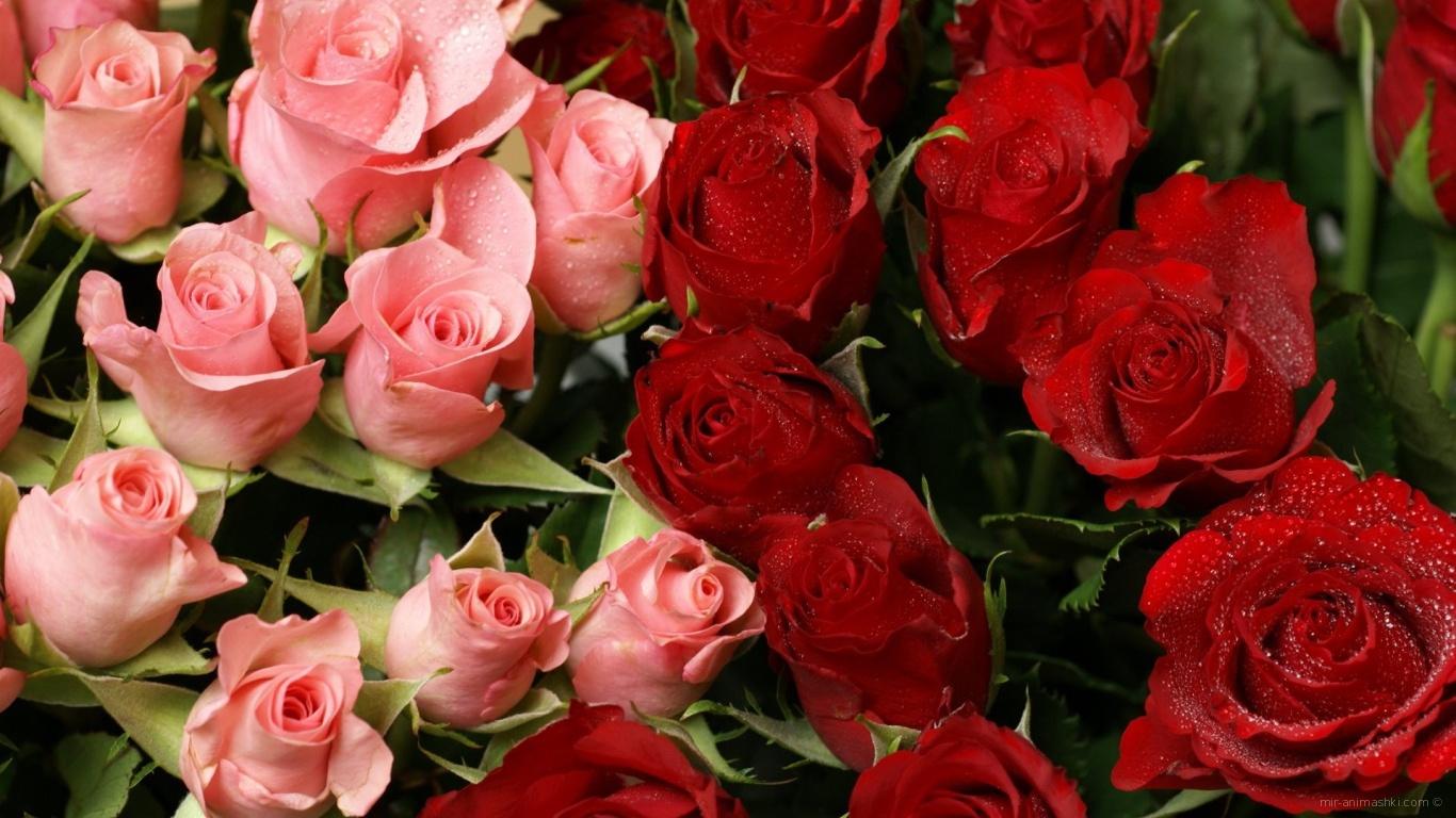 Красные розы на 8 марта в букете с розовыми - C 8 марта поздравительные картинки