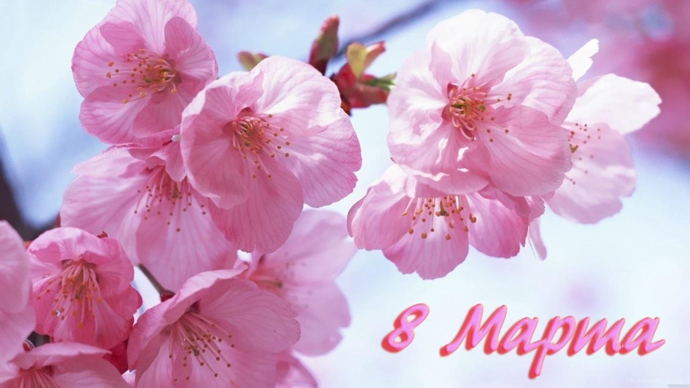 Розовые цветы на 8 марта - C 8 марта поздравительные картинки