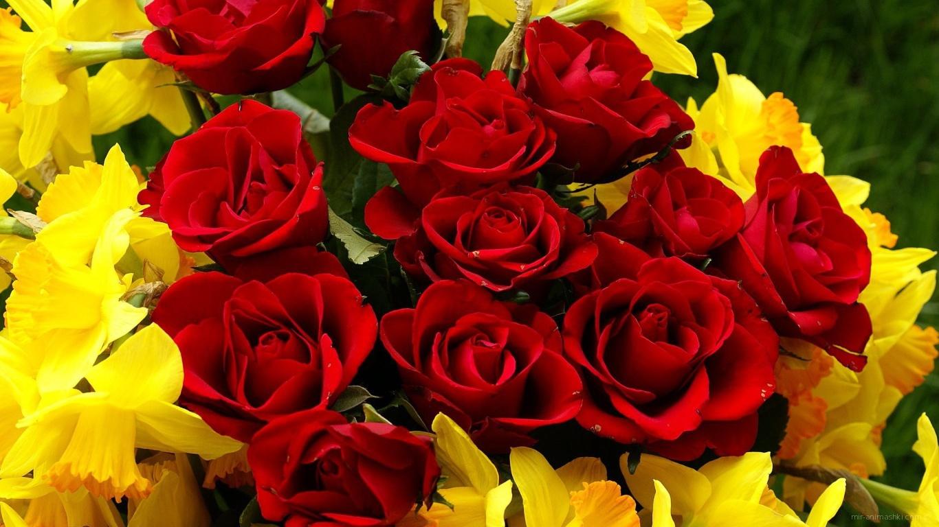 Красные розы на 8 марта с нарциссами - C 8 марта поздравительные картинки