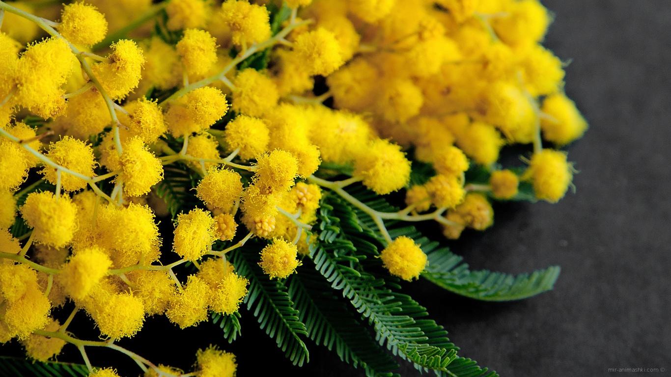 Букет из желтой мимозы на 8 марта - C 8 марта поздравительные картинки