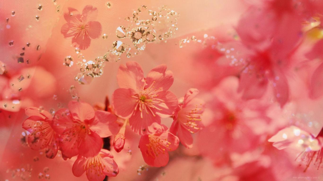 Розовые весенние цветы с кристаллами на 8 марта - C 8 марта поздравительные картинки