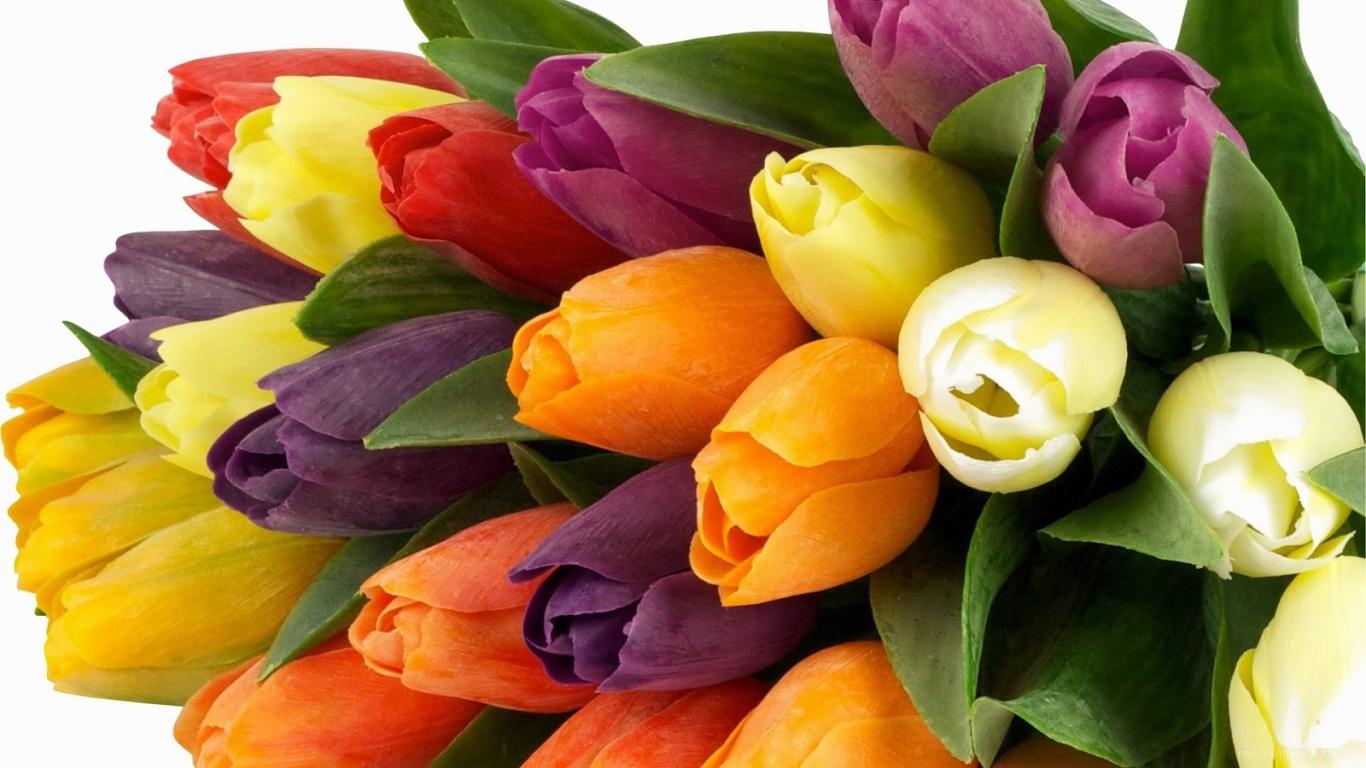 Букет из разноцветных тюльпанов на 8 марта - C 8 марта поздравительные картинки
