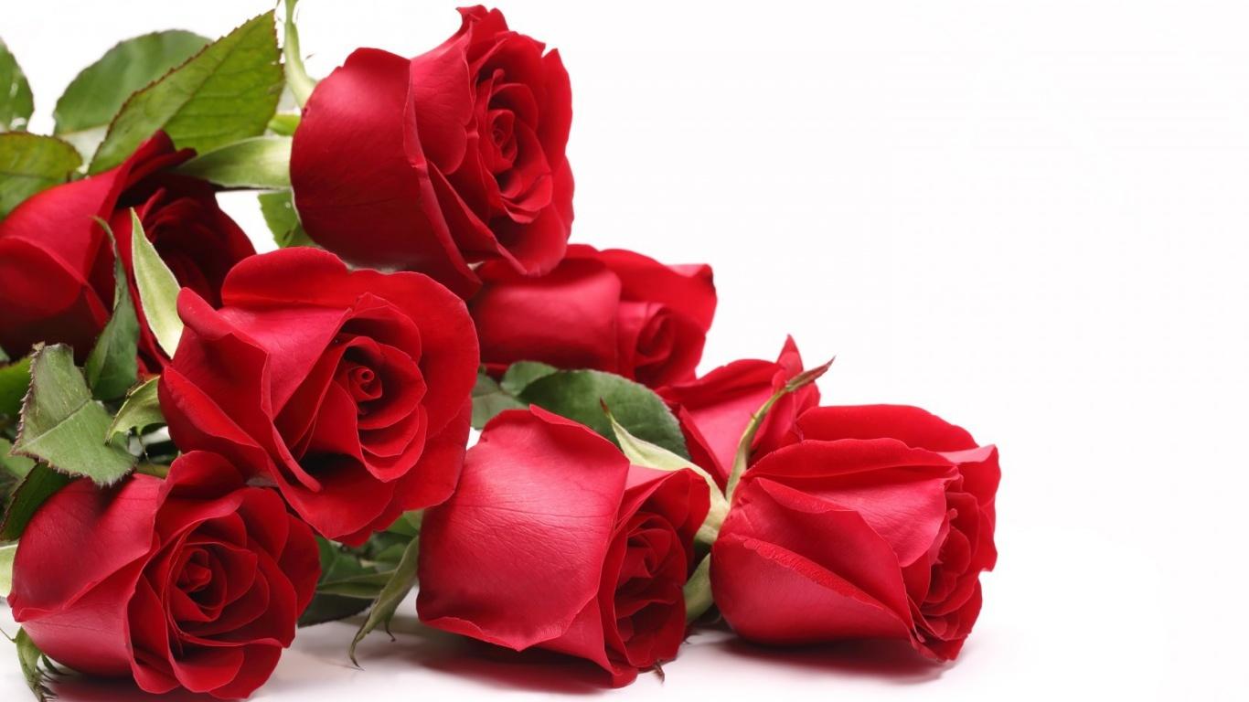 Красные розы для любимой девушки на 8 марта - C 8 марта поздравительные картинки