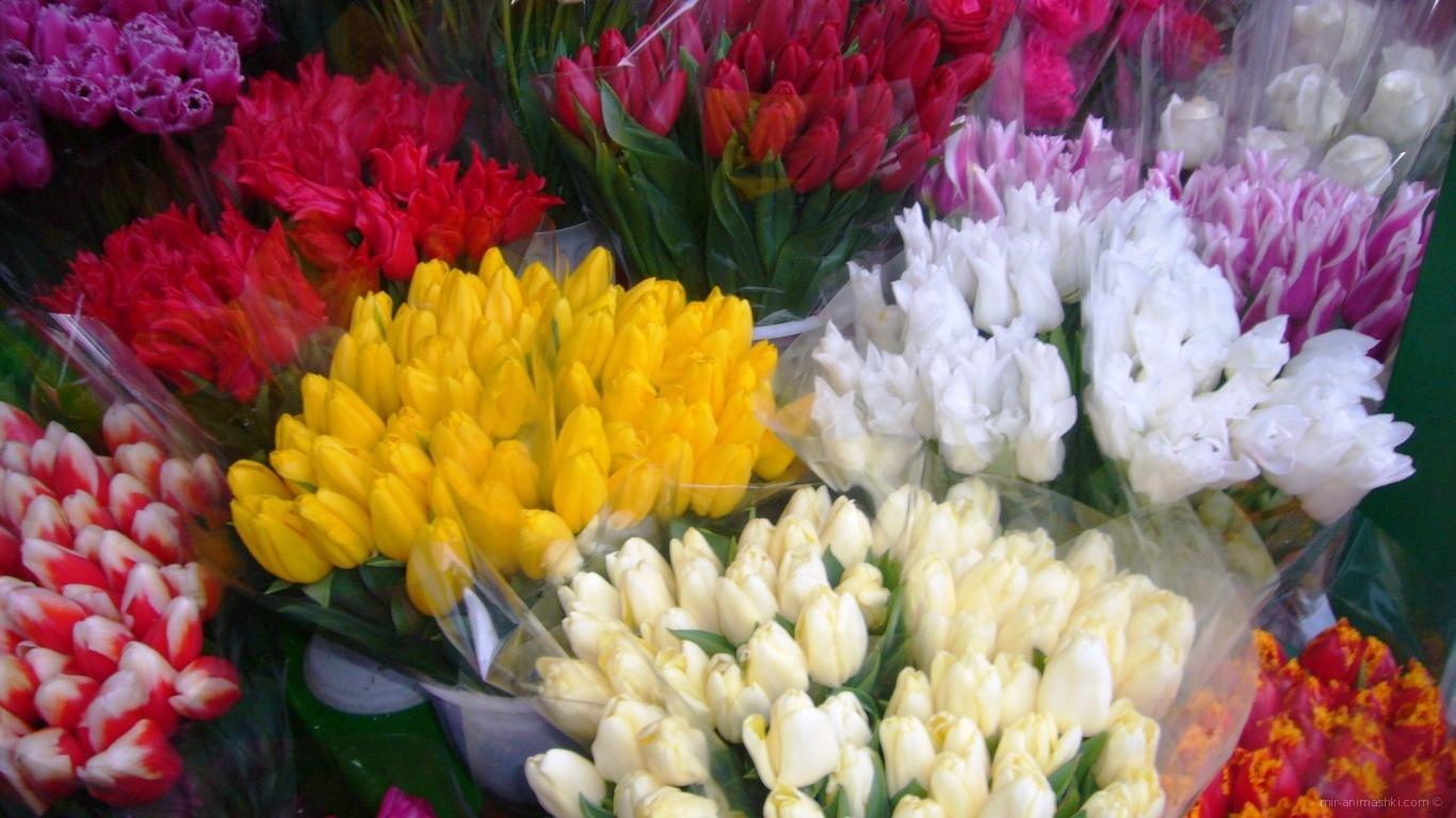 Букеты красивых тюльпанов на 8 марта - C 8 марта поздравительные картинки