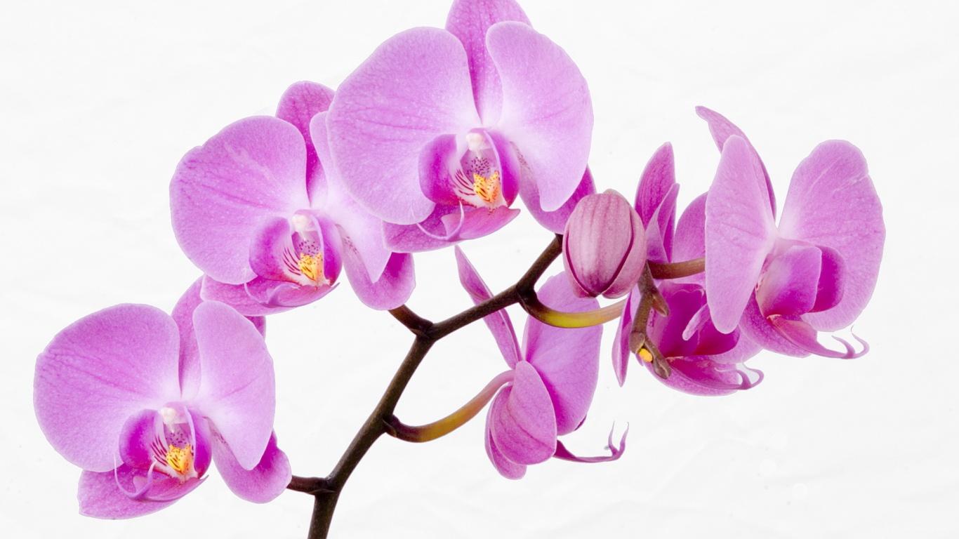 Веточка с красивыми цветами для девушки на 8 марта - C 8 марта поздравительные картинки