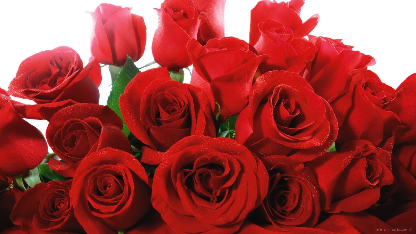 Картинки красивые розы с надписями (35 фото) Прикольные картинки и юмор 95