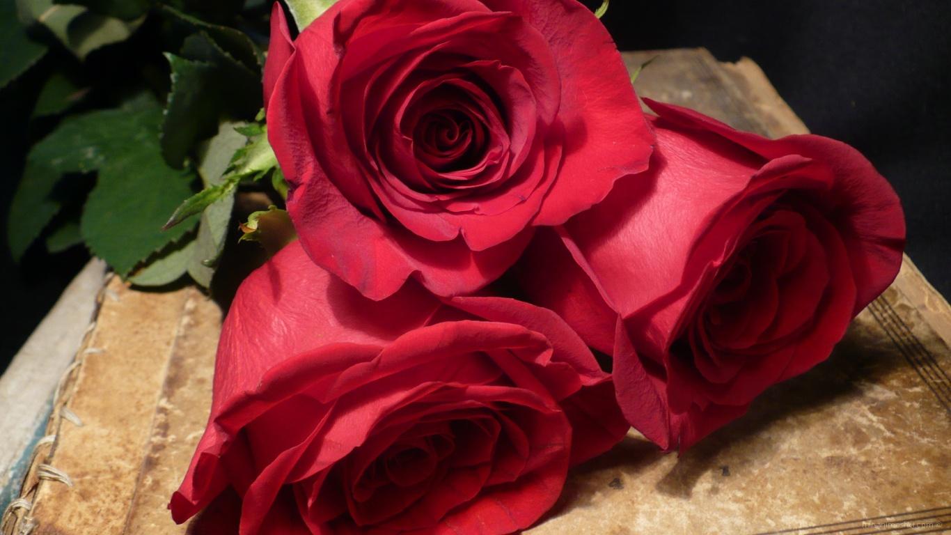 Красные розы на 8 марта для лучшей девушки - C 8 марта поздравительные картинки
