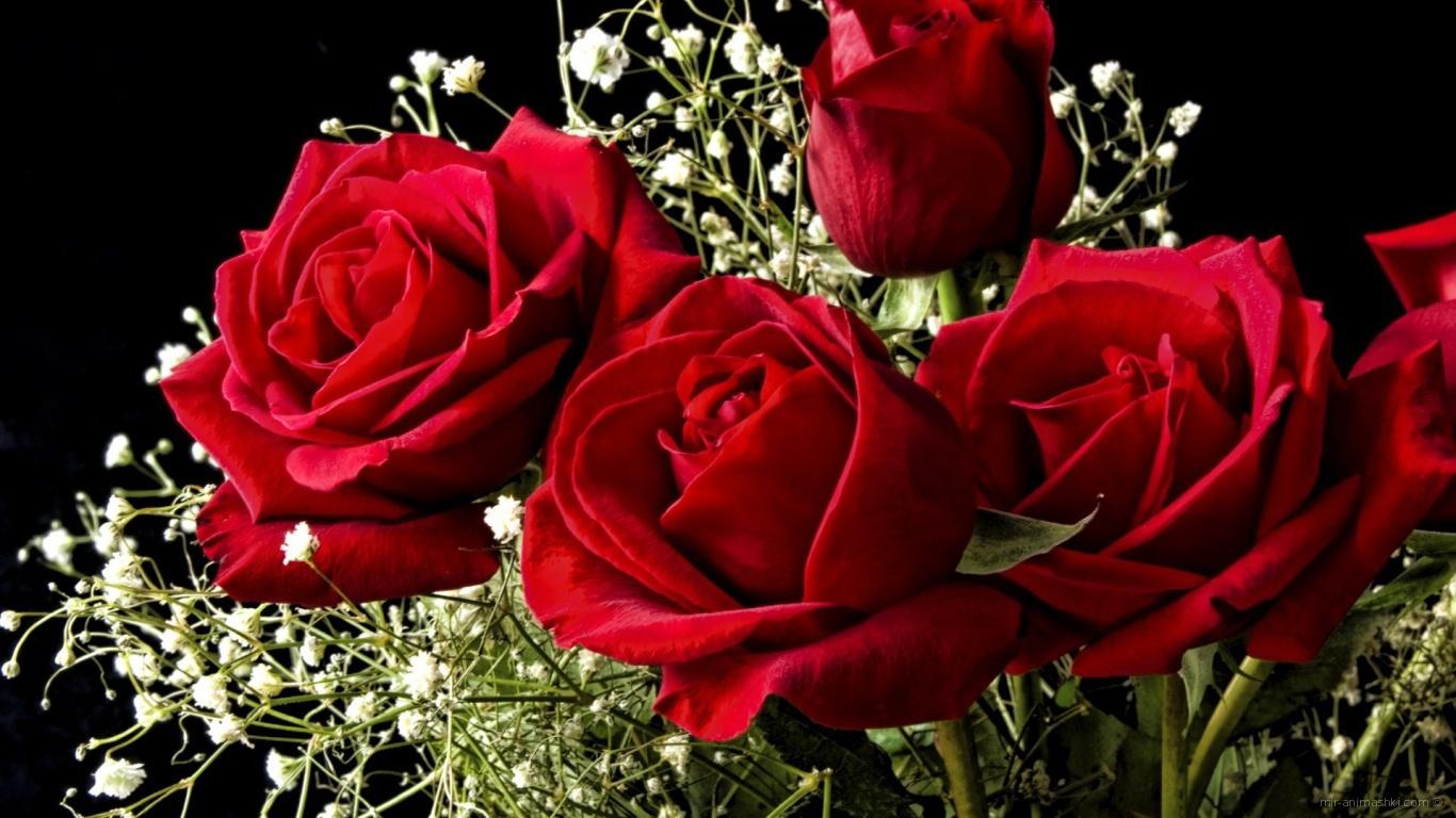 Красные розы на 8 марта на черном фоне - C 8 марта поздравительные картинки