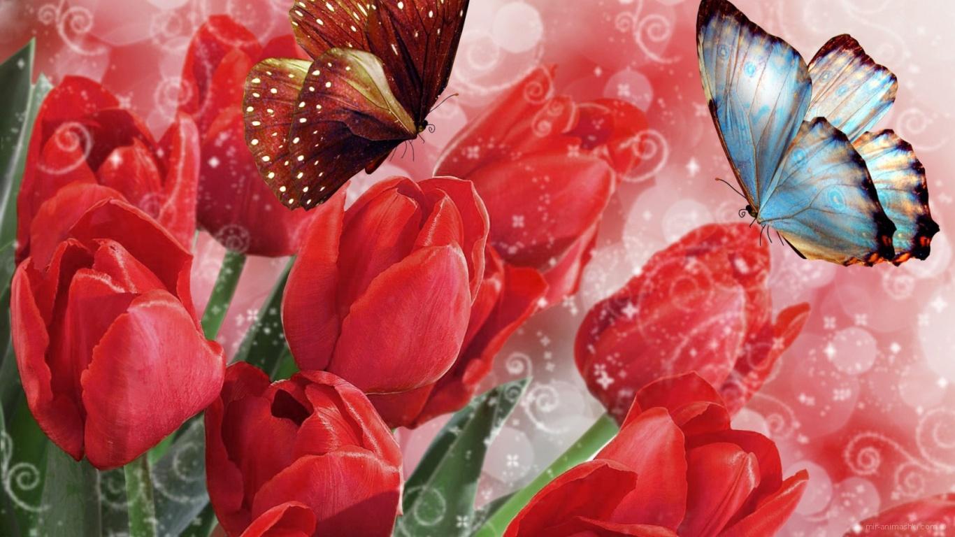 Бабочки на тюльпанах на 8 марта - C 8 марта поздравительные картинки