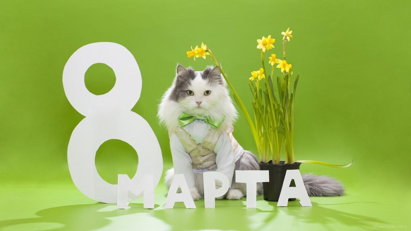 Мартовский кот с букетом для любимой - C 8 марта поздравительные картинки