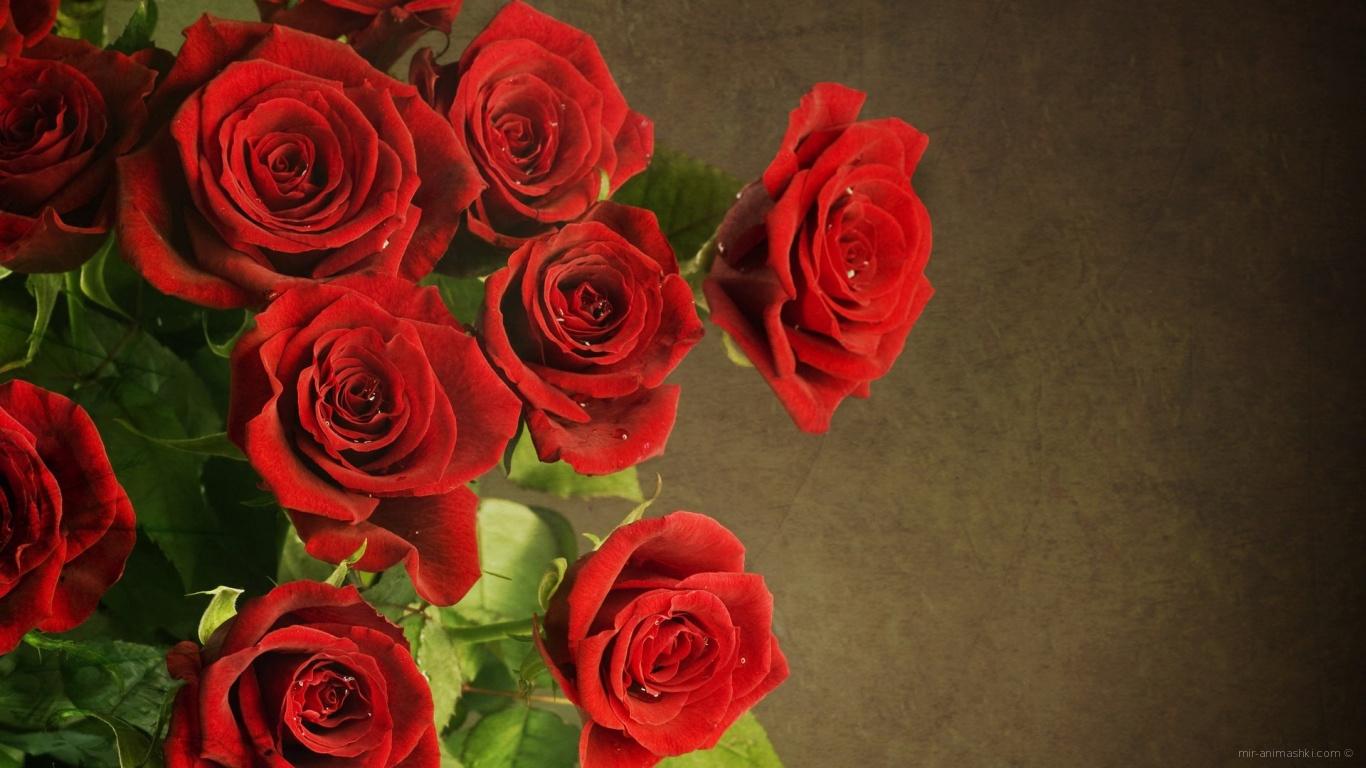 Букет роскошных красных роз на 8 марта - C 8 марта поздравительные картинки