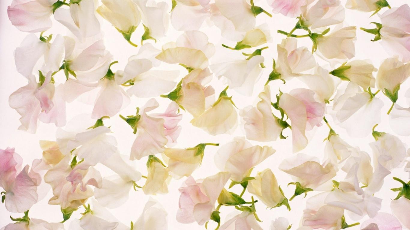 Лепестки белых цветов на 8 марта - C 8 марта поздравительные картинки