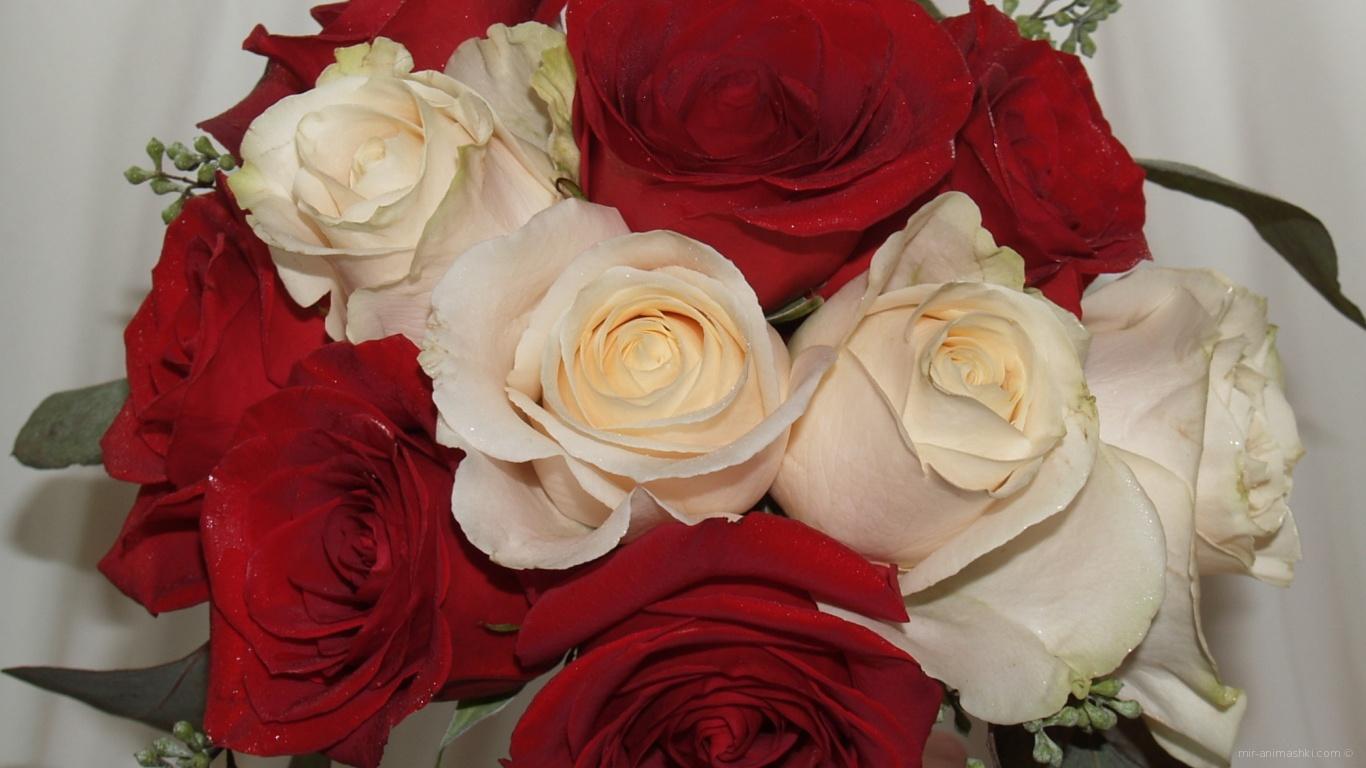 Красные розы на 8 марта с белыми розами - C 8 марта поздравительные картинки