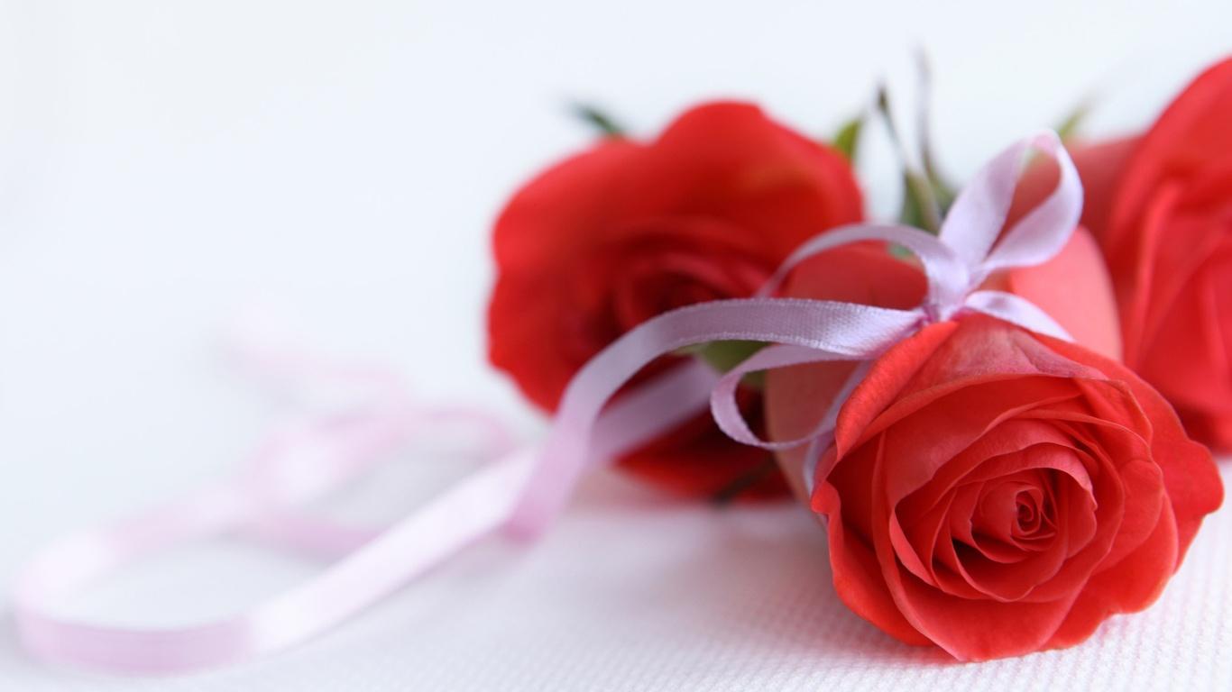 Красные розы на 8 марта с белыми лентами - C 8 марта поздравительные картинки