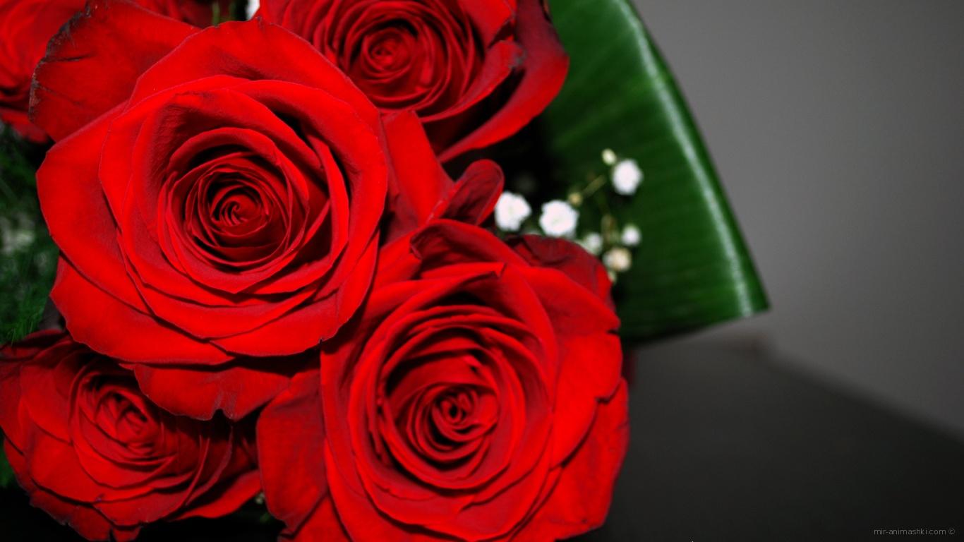 Красные розы на 8 марта с зелеными листьями - C 8 марта поздравительные картинки