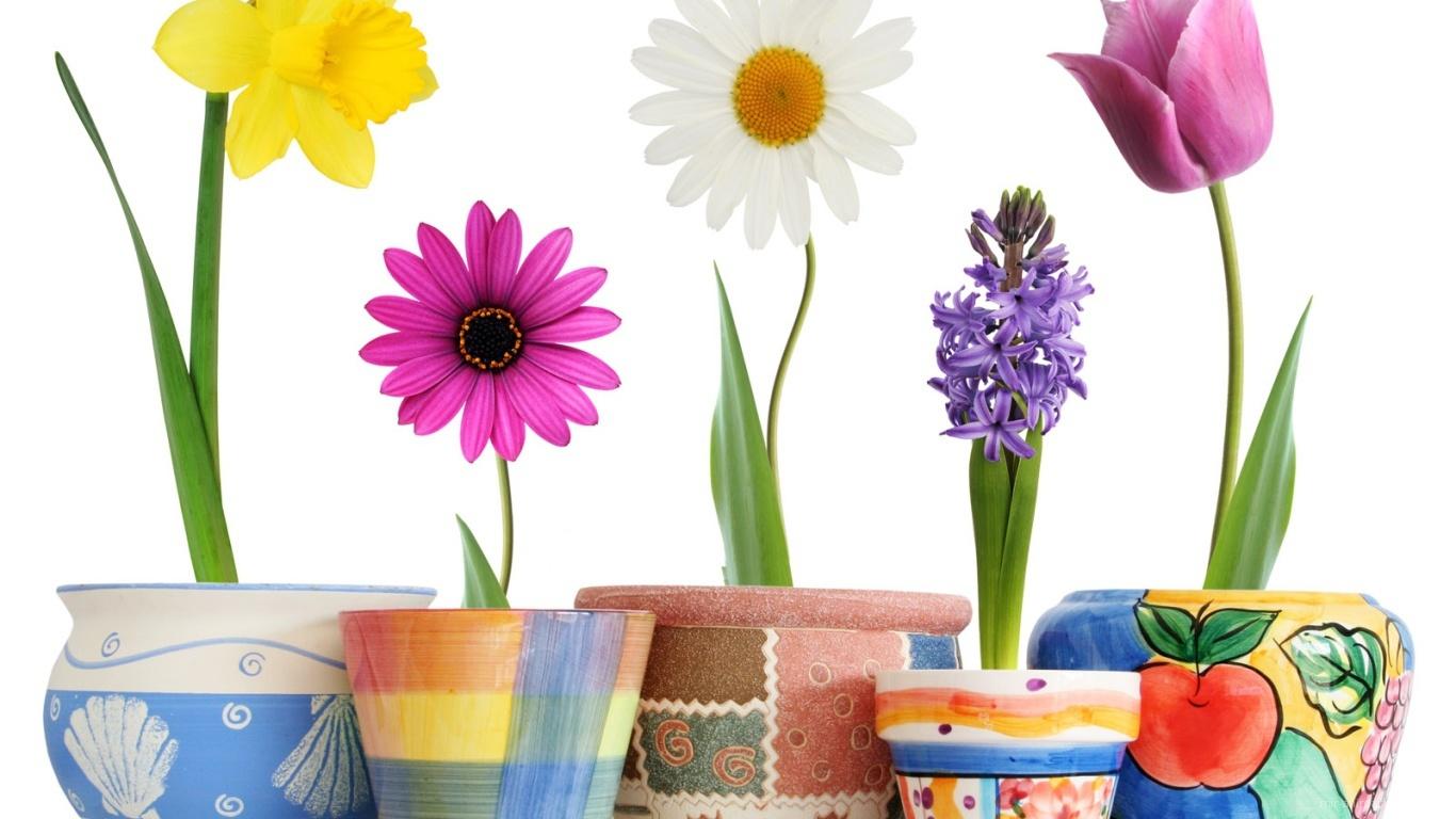 Распустившиеся цветы в горшках на 8 марта - C 8 марта поздравительные картинки