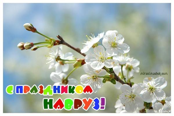 С праздником Навруз - Навруз — Наурыз Мейрамы поздравительные картинки