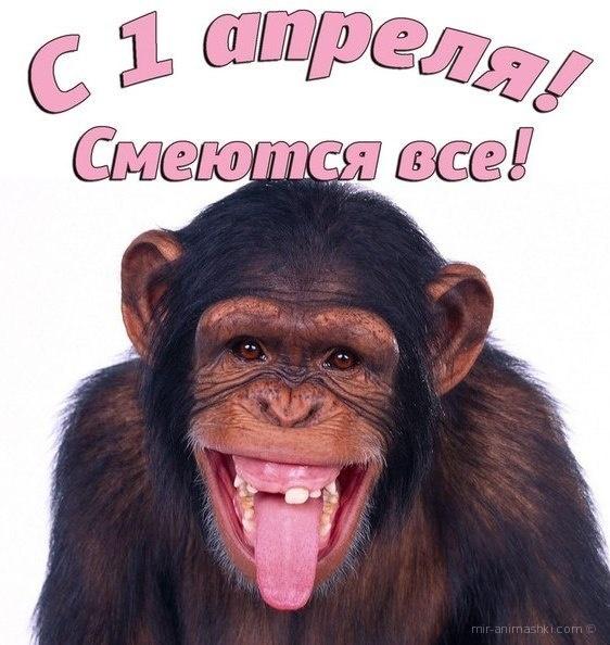 С днём смеха открытки картинки - 1 апреля день смеха поздравительные картинки