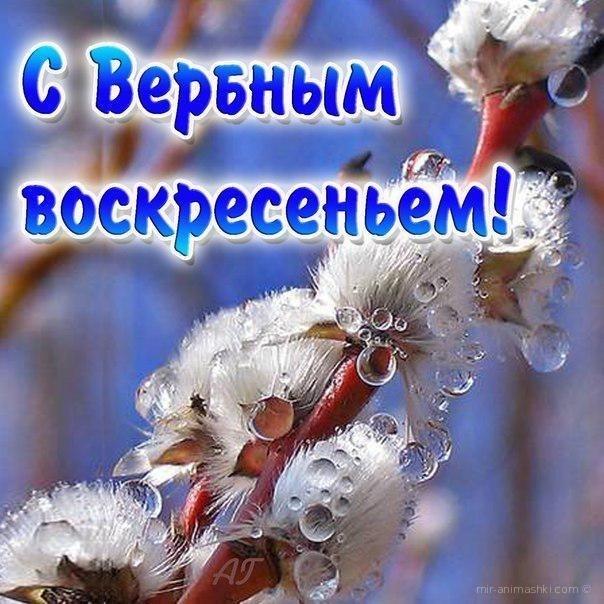 Вербное Воскресенье поздравления в прозе - С Вербным Воскресеньем поздравительные картинки