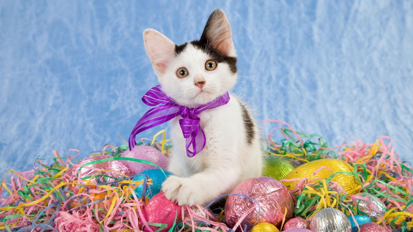 Котенок среди яиц на Пасху - C Пасхой поздравительные картинки
