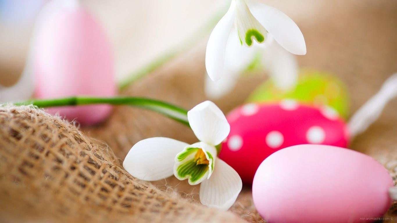 Белые цветы и яйца на Пасху - C Пасхой поздравительные картинки