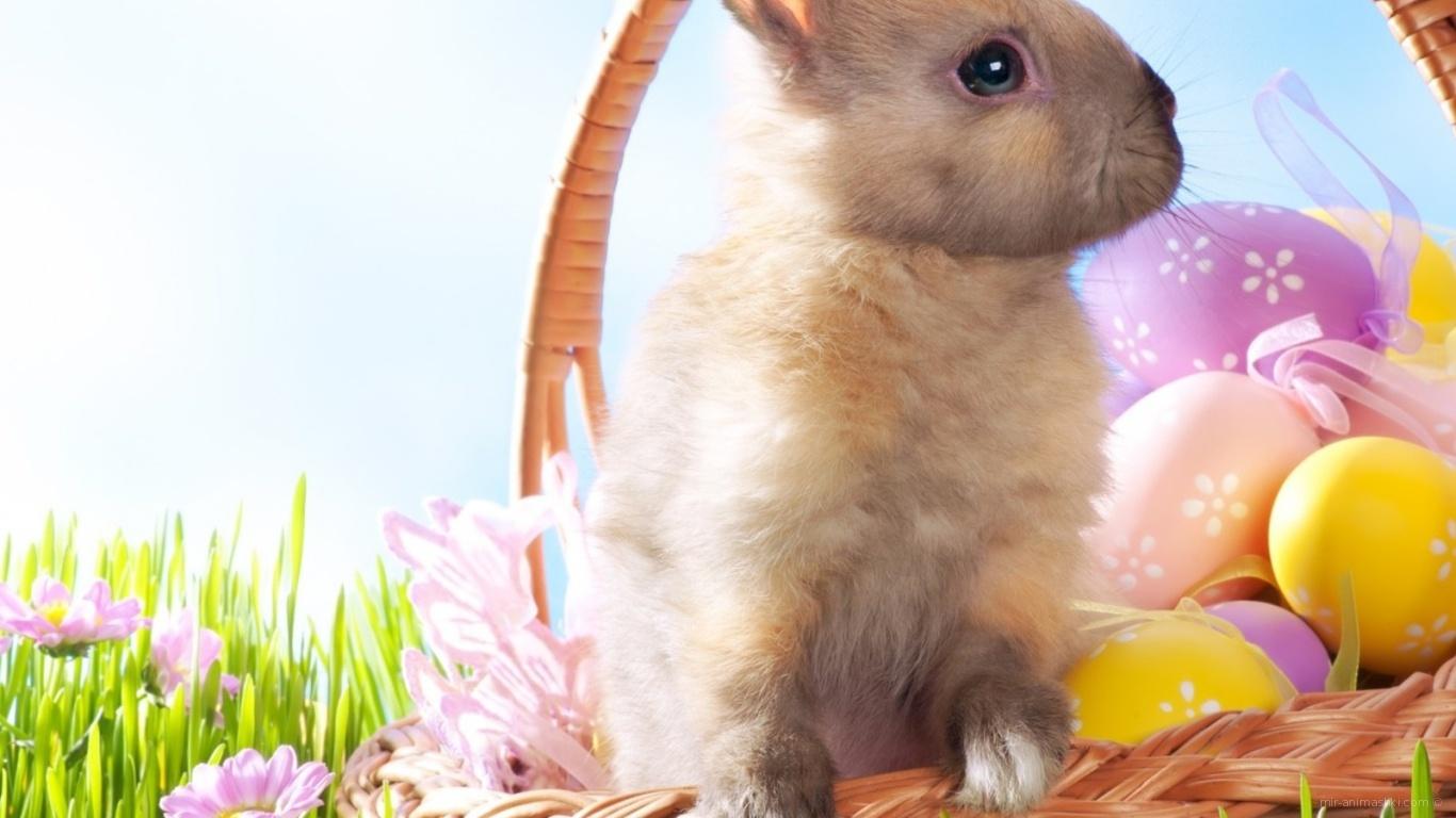 Кролик в корзине на Пасху - C Пасхой поздравительные картинки