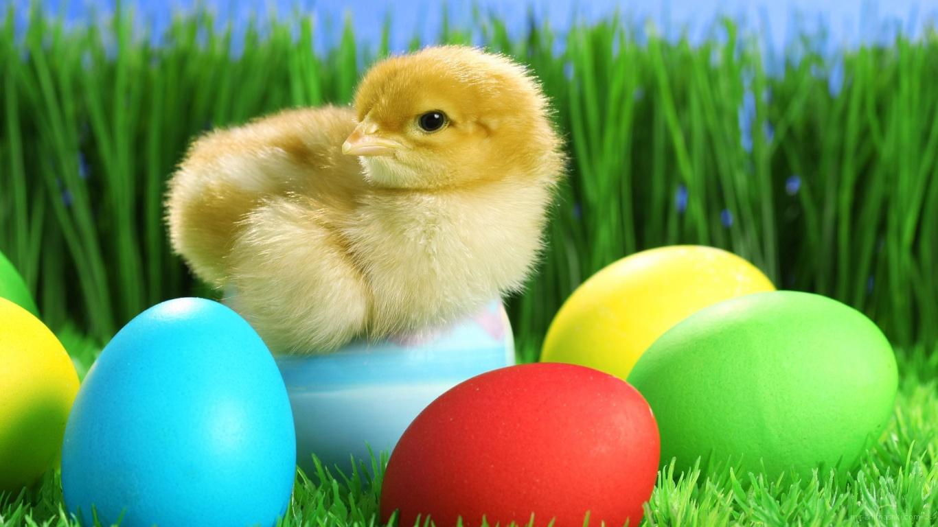 Цыпленок на яйце на Пасху - C Пасхой поздравительные картинки