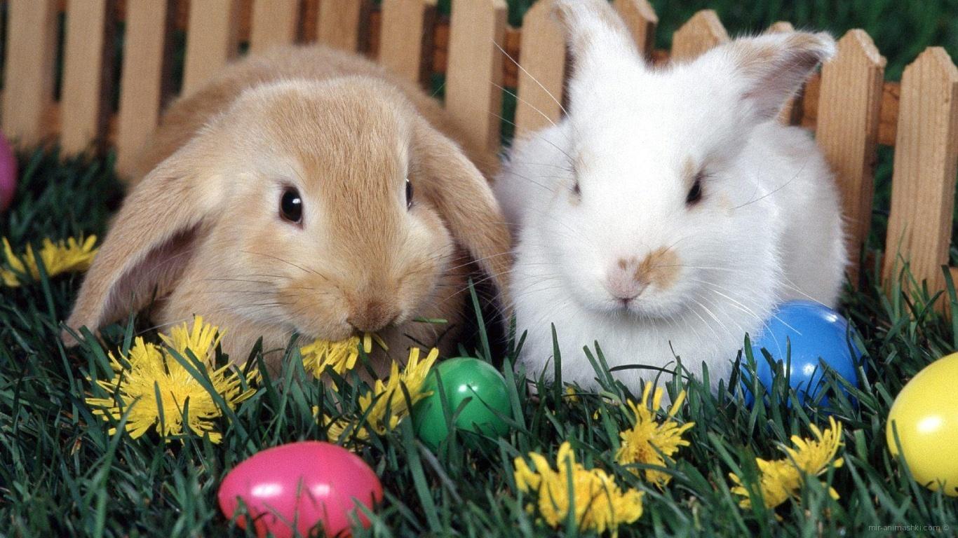 Кролики у забора на Пасху - C Пасхой поздравительные картинки