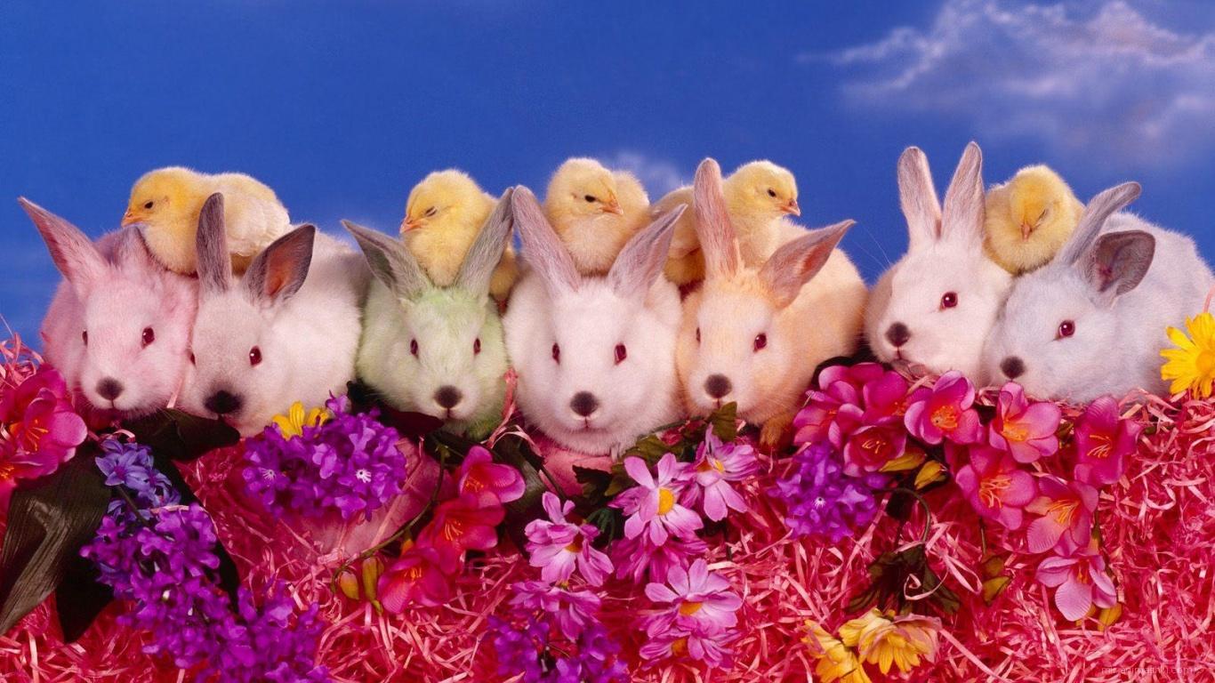 Цыплята и кролики на Пасху - C Пасхой поздравительные картинки