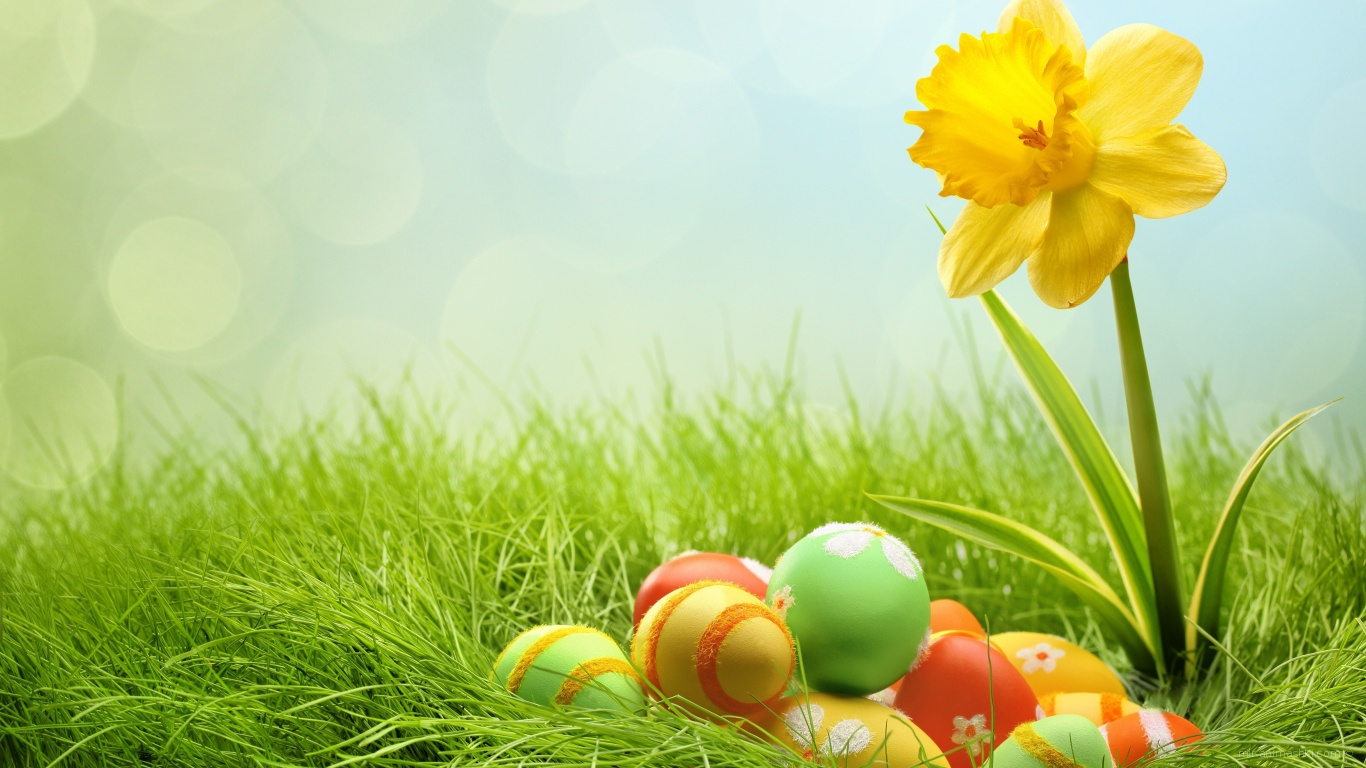 Яйца и желтый цветок на Пасху - C Пасхой поздравительные картинки