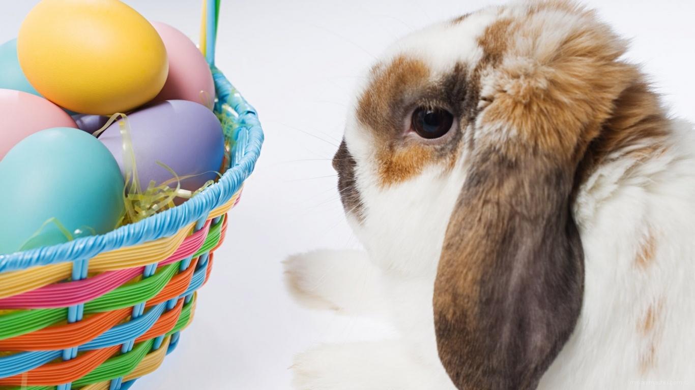Пасхальный кролик - C Пасхой поздравительные картинки