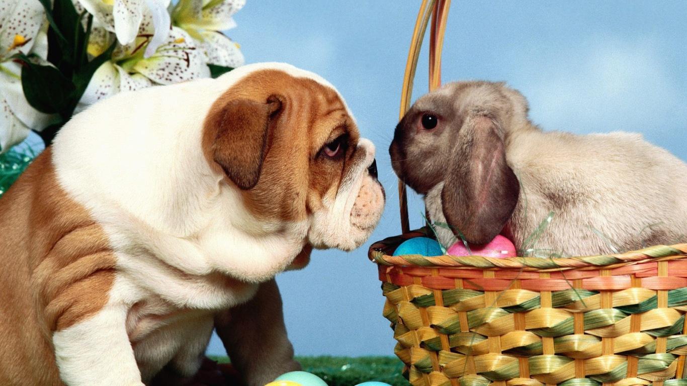 Собака и кролик на Пасху - C Пасхой поздравительные картинки