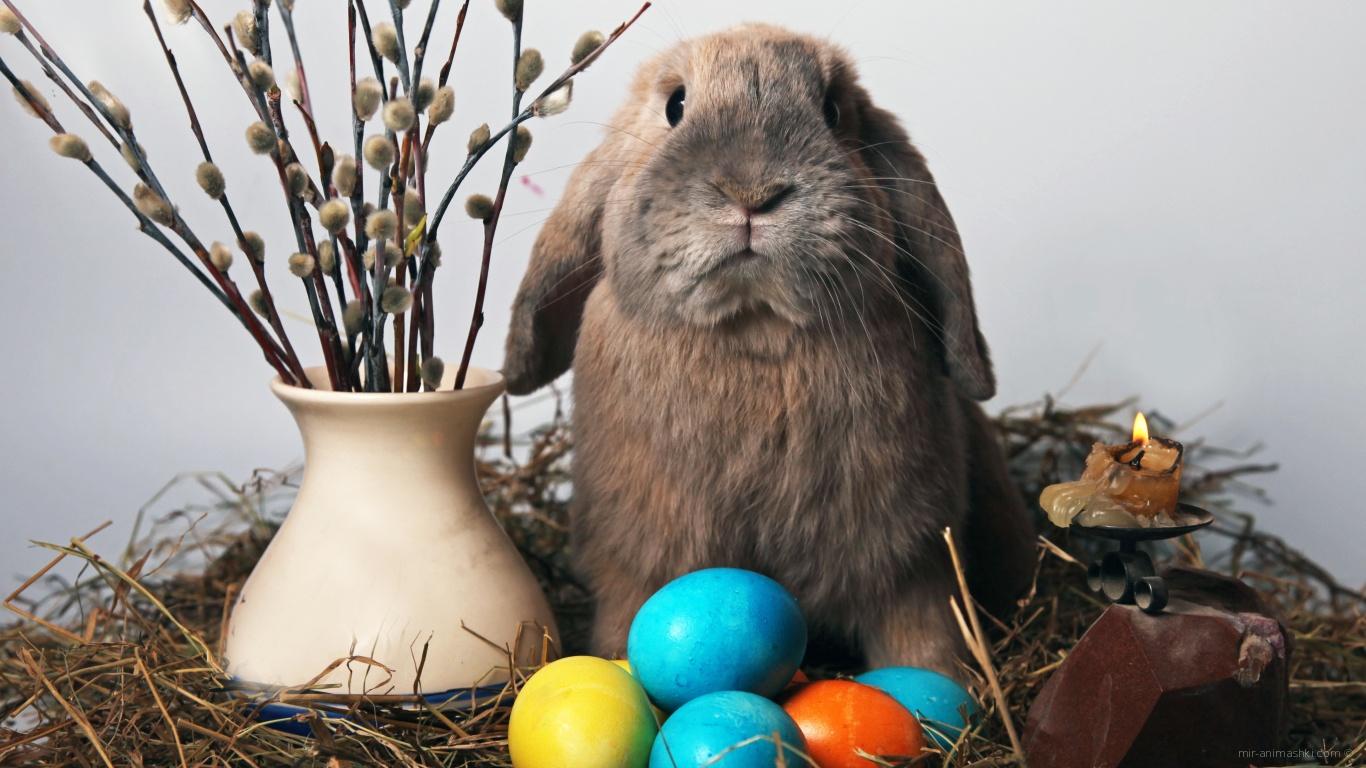 Кролик и мимоза на Пасху - C Пасхой поздравительные картинки