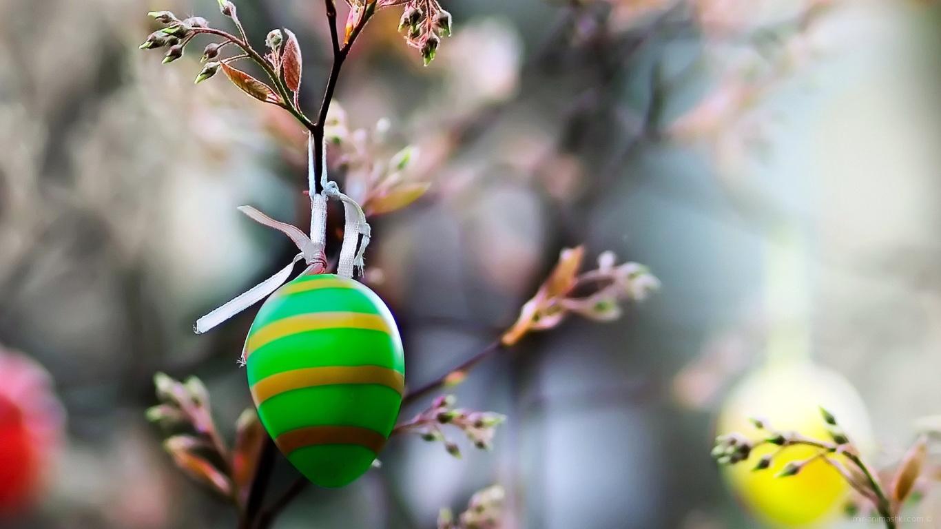 Яйцо на ветке на Пасху - C Пасхой поздравительные картинки