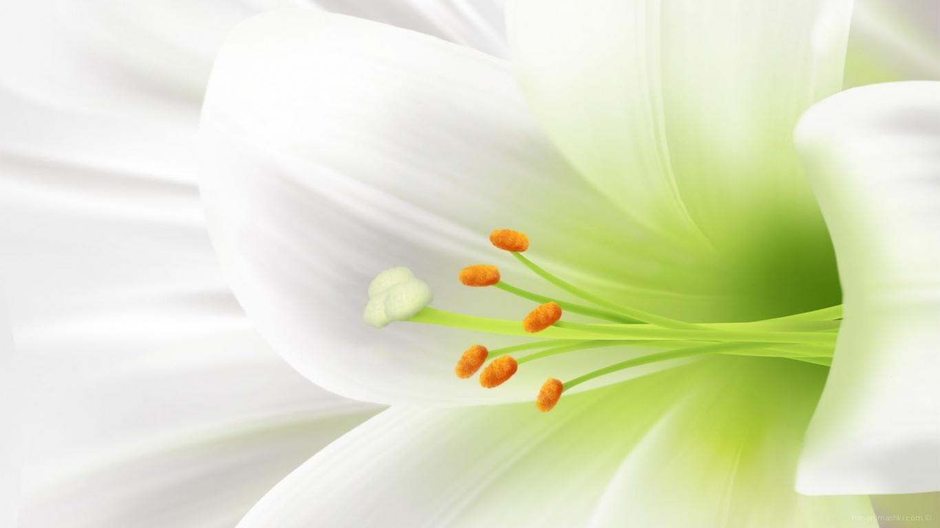 Пасхальный цветок - C Пасхой поздравительные картинки