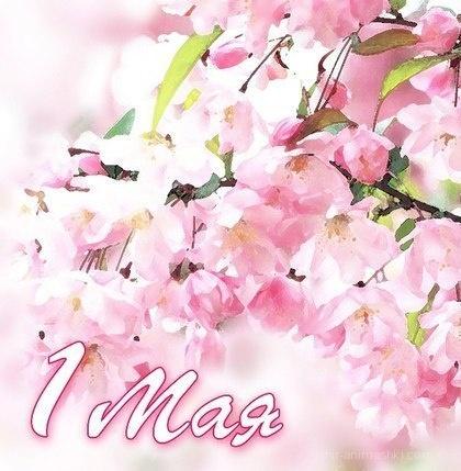 Весеннее поздравление с праздником 1 мая! - Поздравления с 1 мая поздравительные картинки