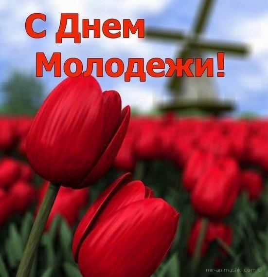 Тюльпаны ко дню молодёжи - С днём молодежи поздравительные картинки