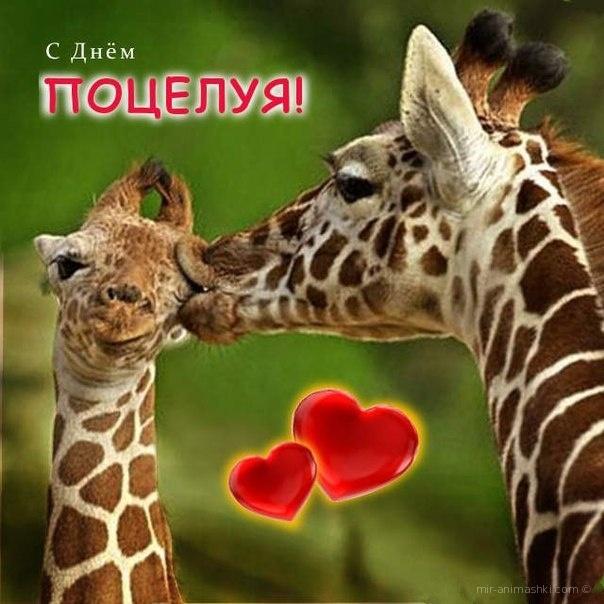 Прикольные картинка с днем поцелуя - С днем поцелуя поздравительные картинки