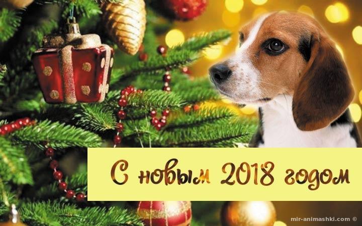 Прикольный собака на ёлки - C Новым годом  2018 поздравительные картинки