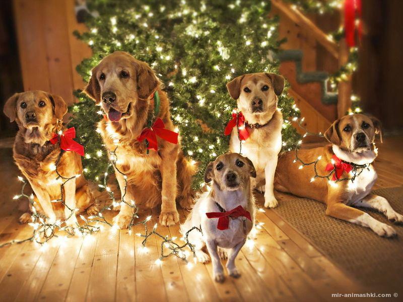 Год Собаки картинки - C Новым годом  2018 поздравительные картинки