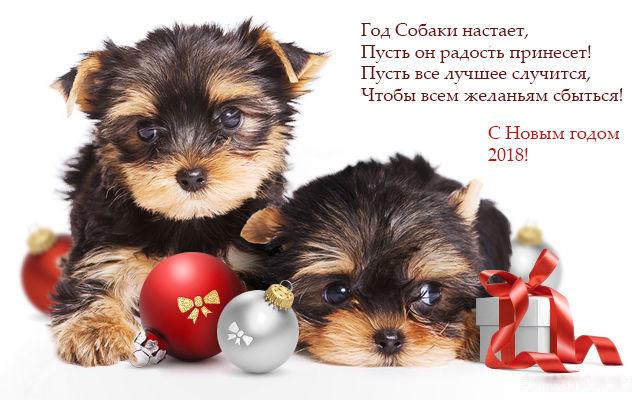 Картинка на Новый год собаки 2018 - C Новым годом  2019 поздравительные картинки