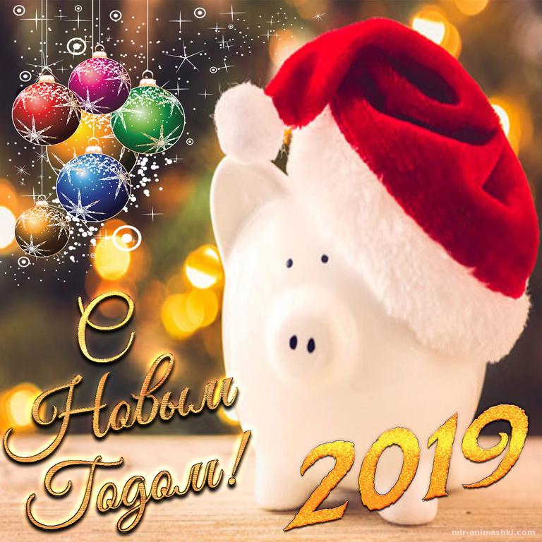 Забавный поросёнок в новогодней шапочке - C Новым годом 2019 поздравительные картинки