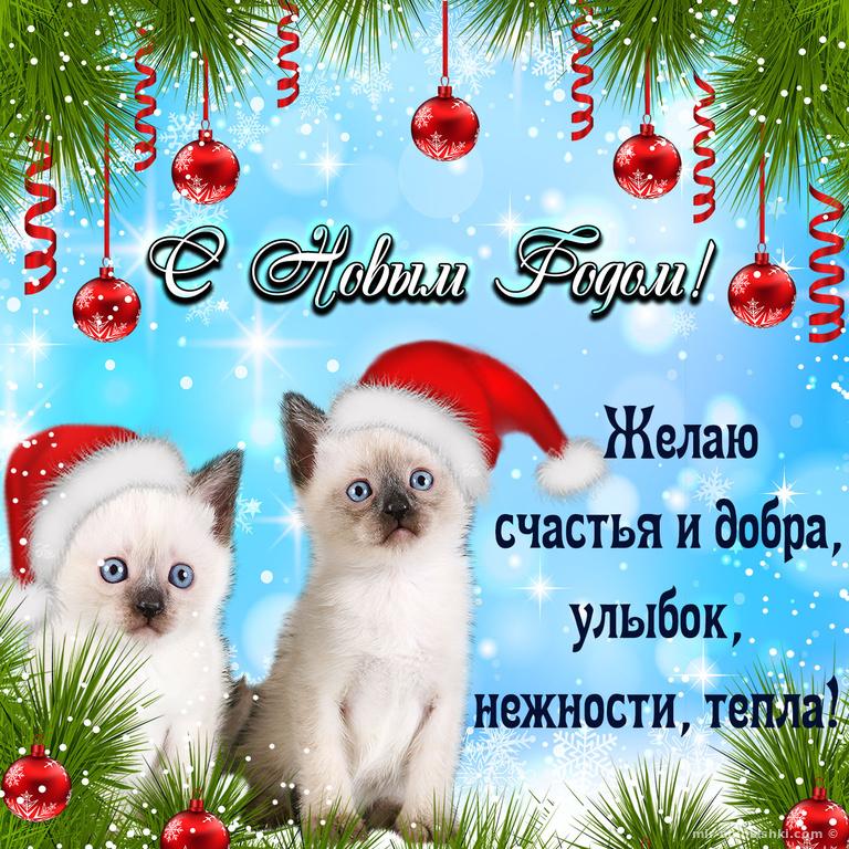 Милые котята поздравляют с Новым годом - C Новым годом 2019 поздравительные картинки