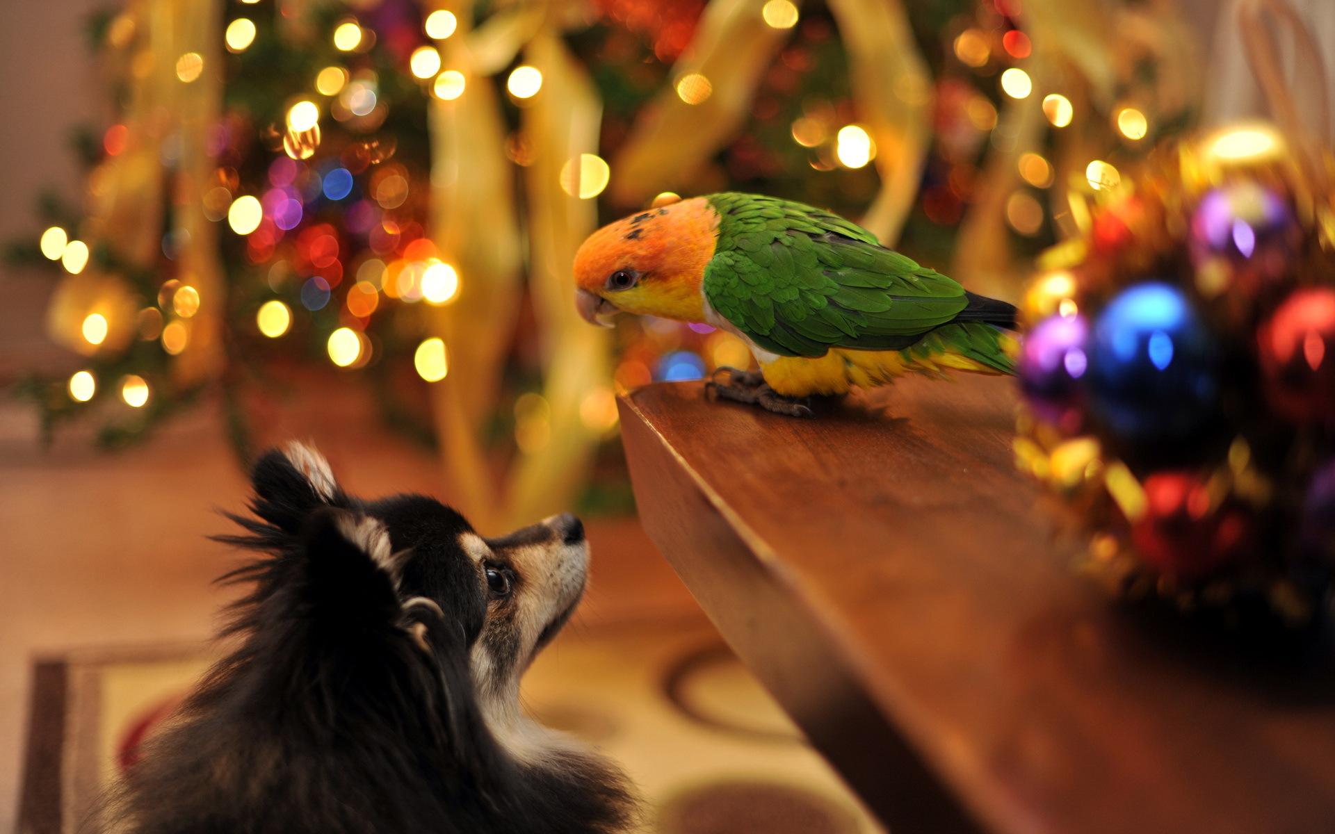 Собака и попугай встречают Рождество - C Рождеством Христовым поздравительные картинки
