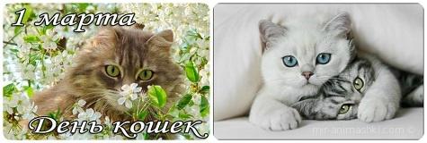 Поздравления с всемирным днем кошек 15