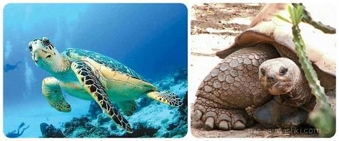 Всемирный день черепахи - 23 мая 2017